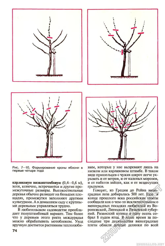 Обрезка яблони весной схема фото