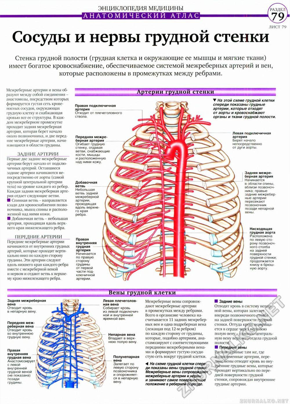Тело Клетки