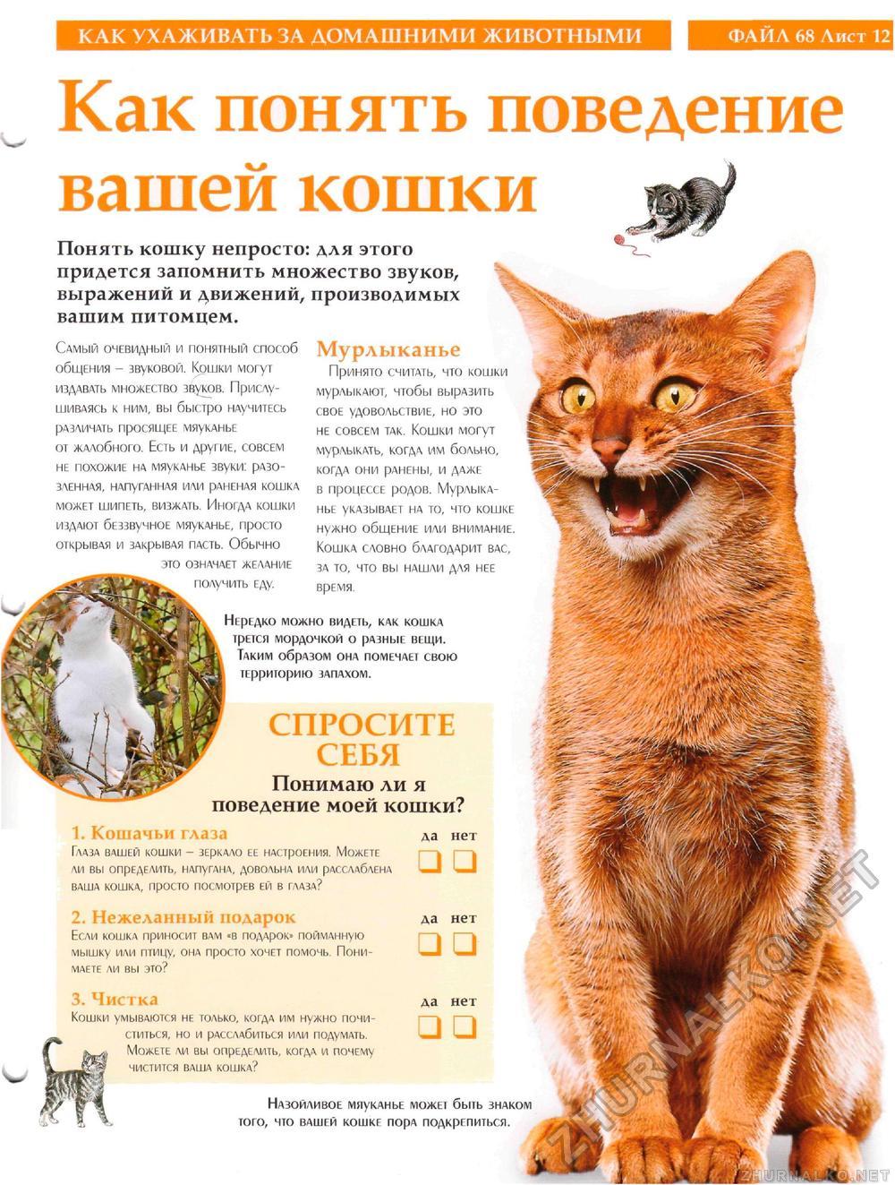 Поведение кошки картинки