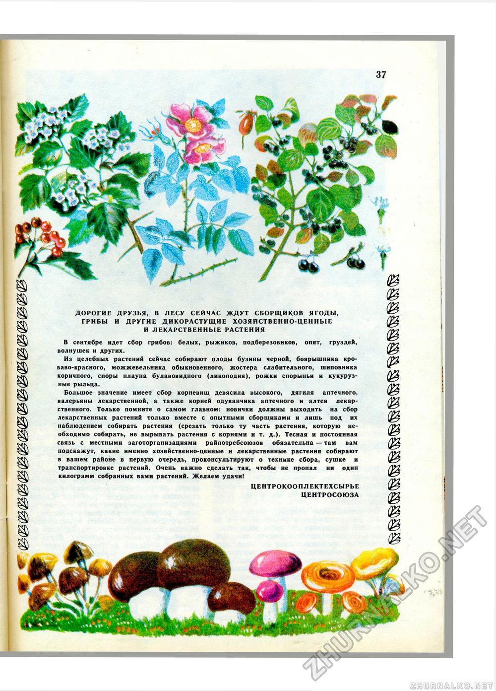 Картинка ягоды в лесу для детей