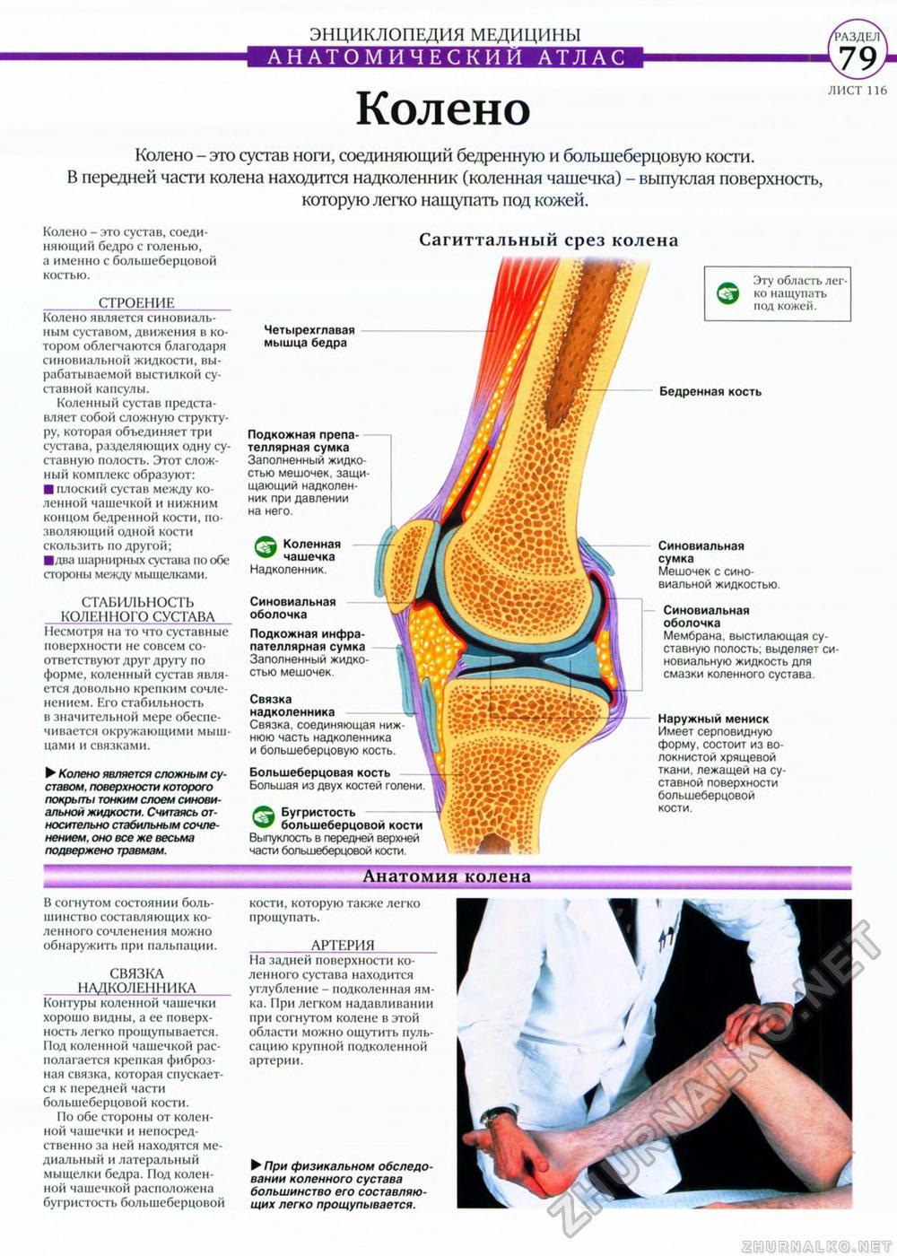 Как эффективно избавиться от грибка ногтей на ногах отзывы