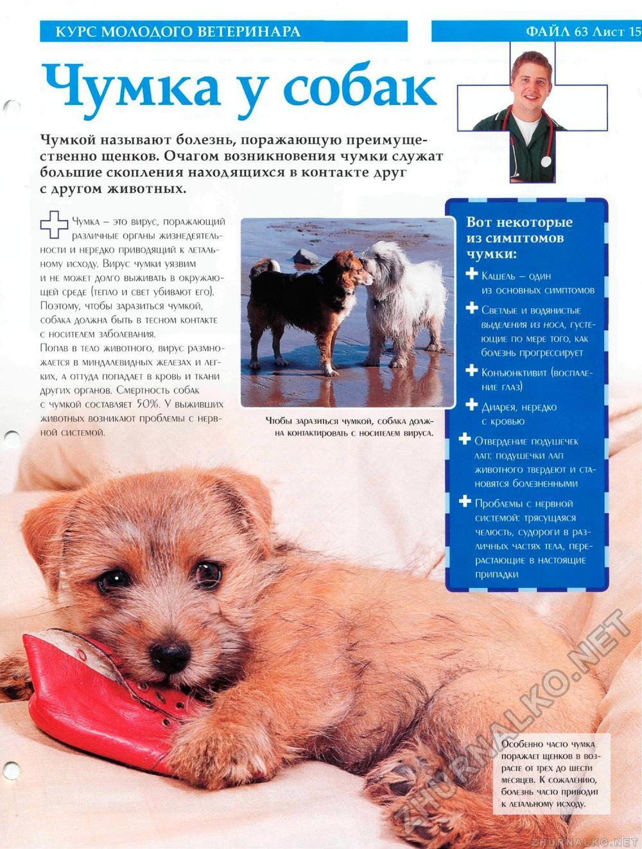 Как лечить чумку у собак в домашних условиях - HowToGetRid 25
