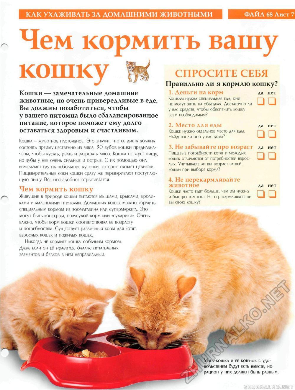 Чем кормить взрослого кота в домашних условиях 122
