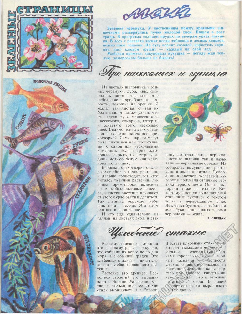 Т. ПЛЕШАК - Костёр 1991-05, страница 47: http://zhurnalko.net/=detskie/koster/1991-05--num47